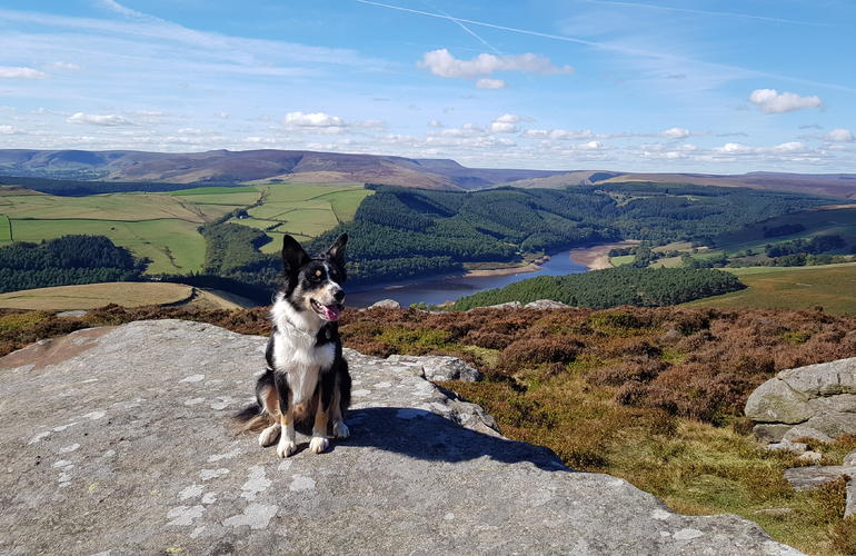 Dog sat in the sunshine on the rocks with the stunning peak district in the distance
