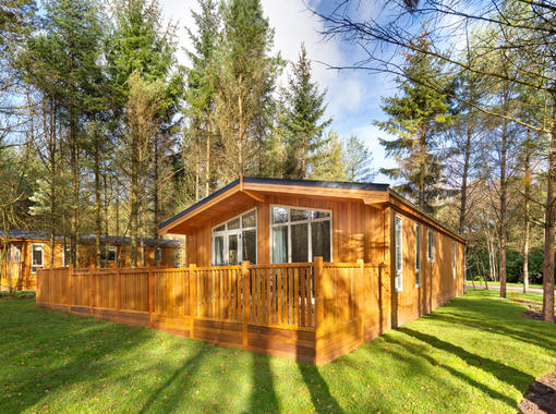 Pinelodge in bright sunshine surrounded by pine tree