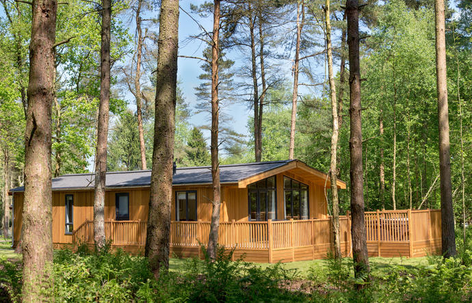 Log cabin surrounded by mature woodland