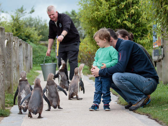 Feeding the penguins at Peak Wildlife park