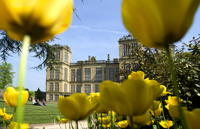Hardwick Hall shown through beautiful yellow  Tulips