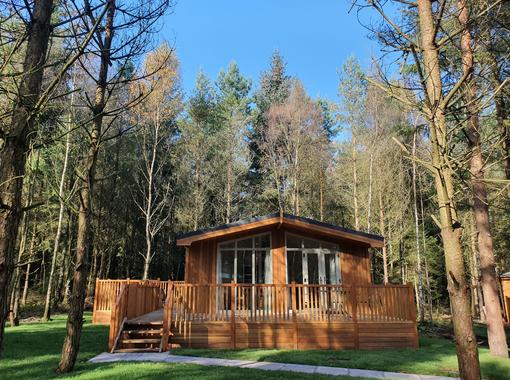 Pinelodge dappled in sunlight surrounded by pine trees on a beautiful summers day